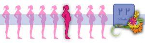 هفته بیست و دوم بارداری