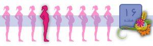 هفته شانزدهم بارداری