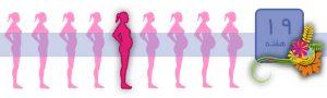 هفته نوزدهم بارداری