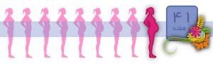 هفته چهل و یکم بارداری