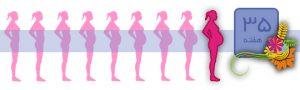هفته سی و پنجم بارداری
