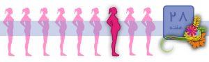 هفته بیست و هشتم بارداری