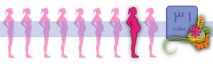 هفته سی و یک بارداری